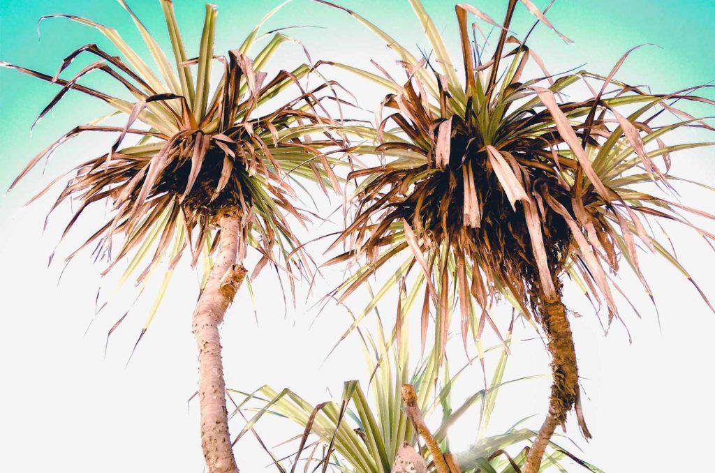 palmy-bali-asijo